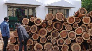 立派な国産杉材木